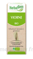 Herbalgem Viorne Macérat bio 30ml à LE BOUSCAT